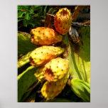 Fruta dos cactos da pera de Prickley Poster