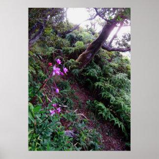 Fuga de caminhada da orquídea pôster