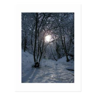 Fuga nevado da floresta cartão postal