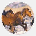 Funcionamento dos cavalos adesivo redondo
