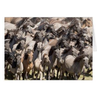 Funcionamento selvagem - cartão do cavalo selvagem