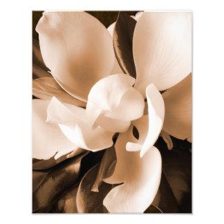 Fundo branco do preto da flor da magnólia fotografias