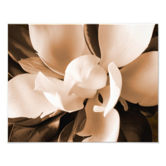 Fundo branco do preto da flor da magnólia impressão de foto