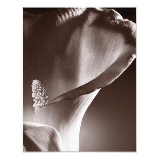 Fundo branco do preto da flor do lírio de Calla Impressão De Foto
