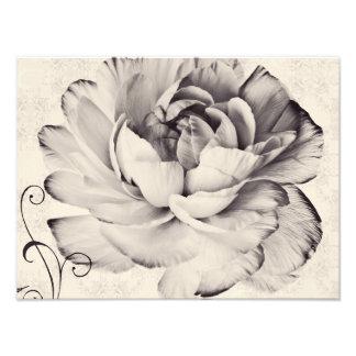 Fundo branco do preto da flor do ranúnculo impressão de foto