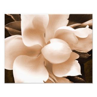 Fundo branco do preto do Sepia da flor da magnólia Impressão De Foto