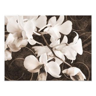 Fundo branco do preto do Sepia da flor da orquídea Impressão De Foto
