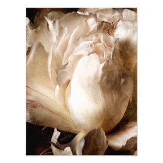 Fundo branco do preto do Sepia da flor da peônia Foto Arte