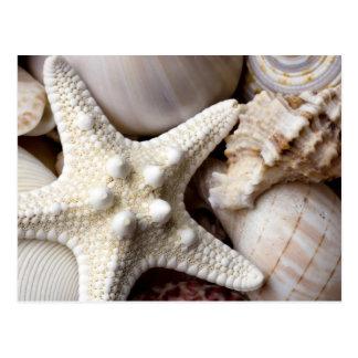 Fundo da estrela do mar de Shell do mar - escudos  Cartão Postal