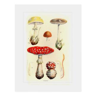Fungos Cartão Postal