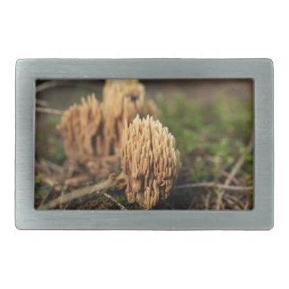 Fungos corais de mancha verdes (abietina de