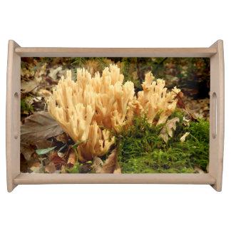 Fungos do stricta de Ramaria que servem a bandeja
