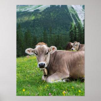 Gado no pasto alto na montanha de Karwendel Poster