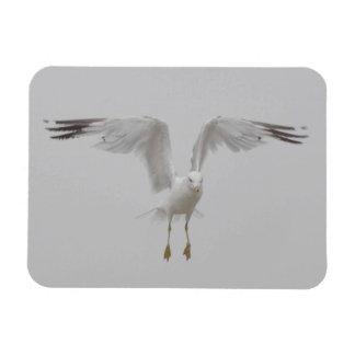 Gaivota com asas perpendiculares ímã