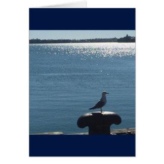 Gaivota em um porto sparkling cartão