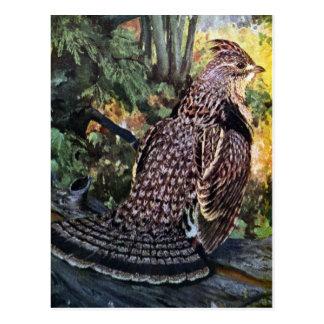 Galo silvestre de Ruffed na floresta Cartão Postal