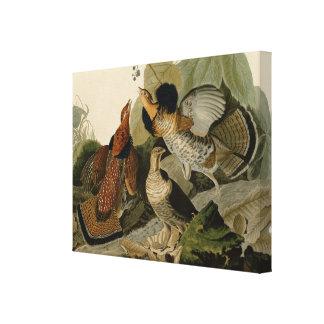 Galo silvestre de Ruffed por John Audubon Impressão Em Tela