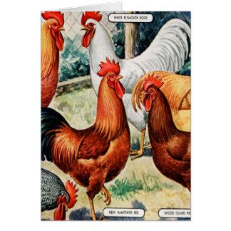 Galos das galinhas do vintage para o anúncio do cartão comemorativo