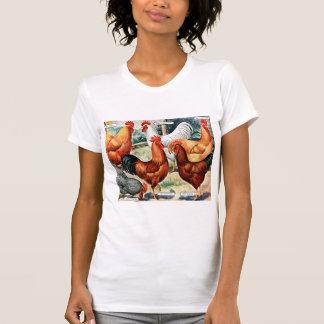 Galos das galinhas do vintage para o anúncio do tshirt