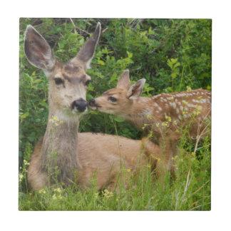 Gama dos cervos de mula com jovem corça 2