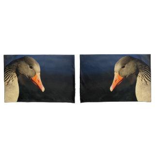 Ganso de pato bravo europeu bonito