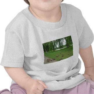 Gansos canadenses pelo lago durante o verão t-shirt