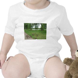 Gansos canadenses pelo lago durante o verão macacãozinho para bebê
