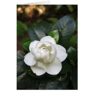 Gardenia Cartão Comemorativo