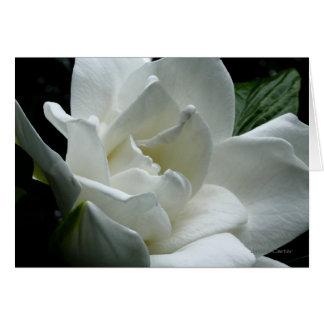 Gardenia Cartão De Nota
