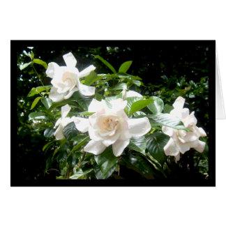 Gardenia, cartão vazio