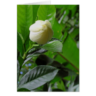 Gardenia da selva cartão comemorativo