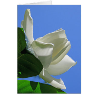 Gardenia havaiano cartão comemorativo