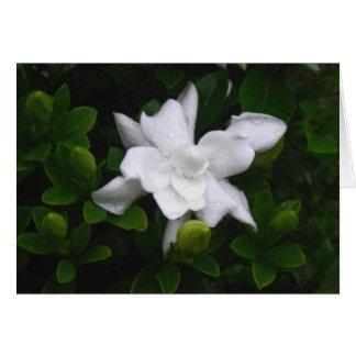 Gardenias de brotamento Notecard floral Cartão De Nota