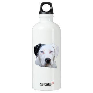Garrafa D'água Cão de cão de Catahoula
