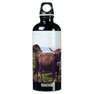 Garrafa D'água Vaca bovina na paisagem bonita