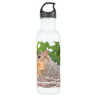 Garrafa de água do esquilo
