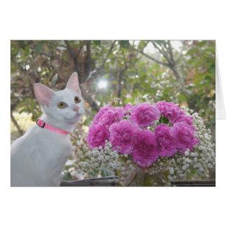 Gatinho branco e cartão cor-de-rosa dos cravos