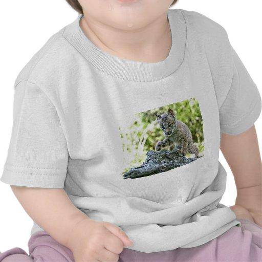 Gatinho canadense do lince no Prowl T-shirts