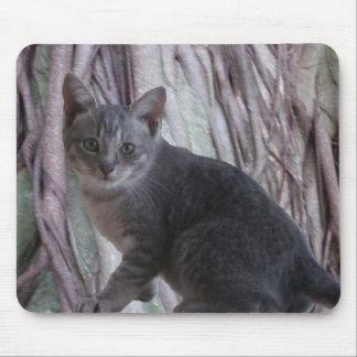 Gatinho cinzento Mousepad