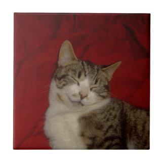 Gatinho cinzento no vermelho azulejo quadrado pequeno