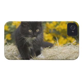Gatinho de cabelos curtos preto & branco no pacote capa para iPhone 4 Case-Mate