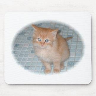 gatinho do bebé [1] (2) mouse pad
