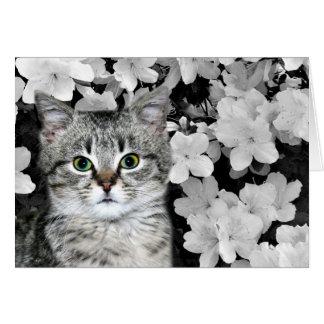 Gatinho do gato malhado nas azáleas cartão