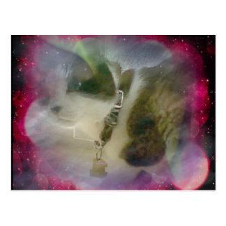 gatinho do sapato de neve cercado por corpos cartão postal
