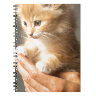 Gatinho doce na boa mão caderno espiral
