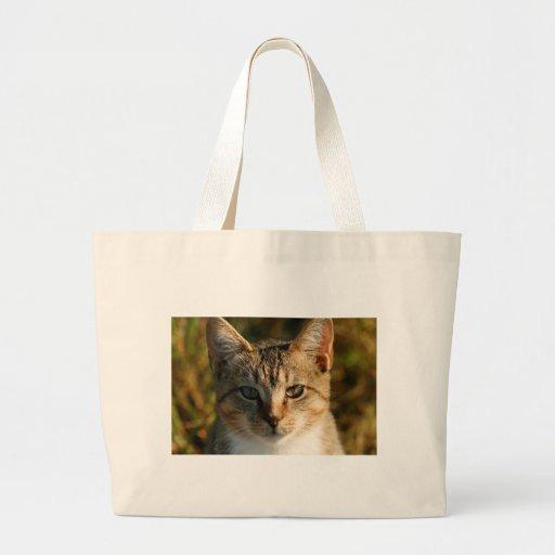 Gatinho inquisidor adorável do gato malhado do beb bolsas