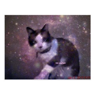 gatinho nas estrelas cartão postal