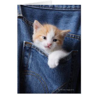 gatinho no saco de jeans cartões