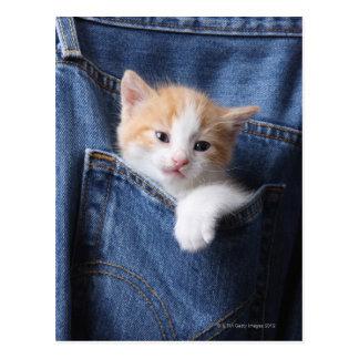 gatinho no saco de jeans cartão postal