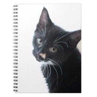 Gatinho preto e branco cadernos